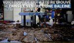 Une baleine meurt après avoir avalé 80 sacs en plastique !