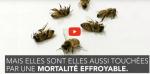 Des apiculteurs vous envoient des graines de trèfle pour sauver les abeilles (et c'est gratuit). Une opération originale lancée par un groupement d'apiculteurs bio de Haute-Garonne.🍀